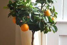 Gardening / by Aarika Thompson