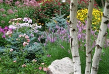 My Garden & Gardens I Wish Were Mine! / GARDEN FLOWERS YARD TREES SHRUBS / by Sue Justus