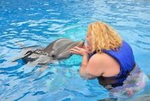 Swim w/ Dolphins ღ / Being in the present of a dolphin is one of the most incredible feelings I've ever felt. I have spent hours on top of hours learning about their behavior. <3 = Dolphins. Some of my fondest accomplishments are taking a dolphin course and swimming with them on more than one occasion. Can't wait to do it again!!!  2014 will be that year.   / by Darlena