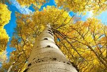 The Splendor of Trees / Remember a loved one...plant a tree.  / by Darlena