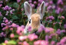 Spring ❀ Fever ❀ / Hello spring... / by Darlena
