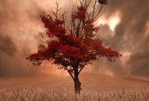 Art ~ Tree Symbolism & Beauty / by Melissa K. Nicholson, LMSW