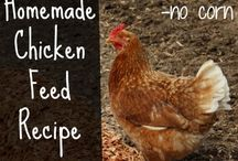 Cluck and Bzzzz / Chicken keeping, beekeeping, novice / by Nicki Scott