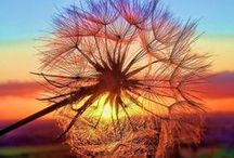 beautiful nature / by Stacey Desmarais Romanski