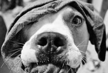 Love's a Pitty / Dedicated to our adopted pitty along with all the pitty puppies we fostered as well as all those pitbulls who are left to die in shelters due to cruelty, neglect, and breed discrimination {ADOPT~DON'T SHOP} / by Theresa Ocds