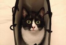 Cats and other totally awesome animals!! / All my babies / by Cheryl May