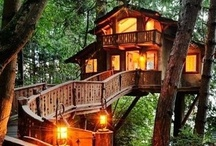 Wonderful Tree Houses / Tree houses and cabins in the woods and forests on the world.  / by Firdaus Haque