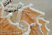 ice - snow / by ➰ Gloria ➰