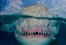 Frightening Fish / Join in the world of mermology across all of our platforms via www.mermology.com and help us tell the ocean story. / by Mermology