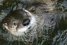 Iowa Critters / Learn more about the fish and wildlife that call Iowa home. / by Iowa Department of Natural Resources
