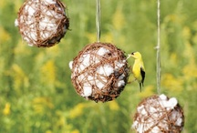 DIY Outdoors / Projects and crafts for the outdoor-minded. / by Iowa Dept of Natural Resources
