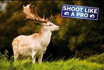 Iowa Nature Photography / Tips, tricks and lots of ideas on how to capture Iowa's gorgeous scenery and beautiful wildlife on camera. / by Iowa Department of Natural Resources