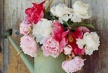 My Favorite Flowers / by Lissa Knott