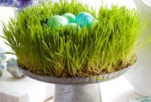 Easter..... / by Maria Reisz-Springer