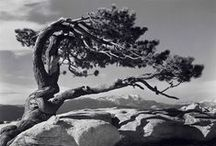 Art.... Photo Ansel Adams / Feb1902/Apr1984 was an American photographer and environmentalist. His black-and-white landscape photographs of the American West, especially Yosemite National Park, have been widely reproduced. With Fred Archer, Adams developed the Zone System as a way to determine proper exposure and adjust the contrast of the final print. The resulting clarity and depth characterized his photographs. Adams primarily used large-format cameras because their high resolution helped ensure sharpness in his images / by Waldir Seidenthal