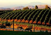 Vineyard Weddings / The Villa de Amore vineyards make a beautiful backdrop for weddings.   / by Villa de Amore California Weddings