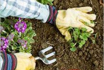 Gardening Ideas / by Geminigail