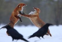 Foxes / by Wynter Black