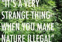 Legalize / by Emma Soldon