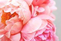 Flora / by Katie Ebaugh
