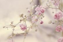 Garden & Flowers * Olliebollies / by Olliebollies ♥