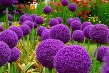 Flowers & Plants / by Jennifer Archambeault