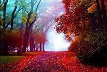 Autumn Splendor / Most beautiful season of the year ~ Autumn! / by MsAbigail