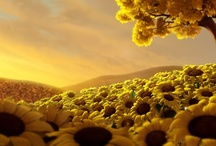 """Sunflowers / """"Bring me then the plant that points to those bright Lucidites swirling up from the earth, And life itself exhaling that central breath! Bring me the sunflower crazed with the love of light.""""  ~ Eugenio Montale / by Merilee"""