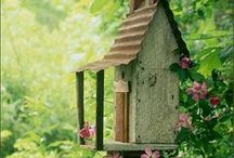 Birdhouses / by Mary Templeton