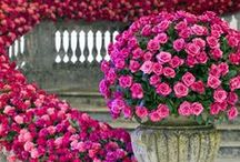 Landscaping with Planters and Containers / by Renee' Snow