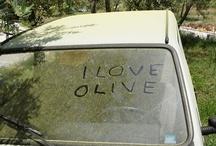 Safford Fiat ... Verde Oliva / Olive / by safford fiat of fredericksburg