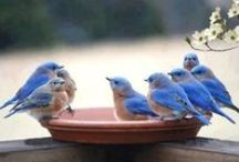 birds / by Yvonne Fitzell