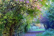 paths / by Yvonne Fitzell