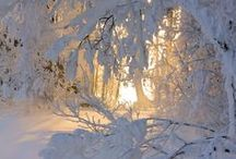 Winter Wonderland / Let it Snow! Let it Snow! Let it Snow! / by LUVS 2 PIN