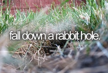 Pinterest > Falling Down a Rabbit Hole / by Jeff Nelson