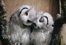 Owl always love you / by Pam Paul