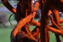 autumn in albemarle: virginia vineyard wedding 9 nov 13 / by Gentle Gardener Green Design