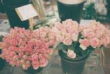 Bloom / by Megan Schachtebeck