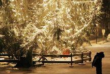 Winter / by Katy Strenge