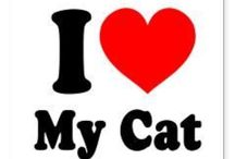 Crazy Cat Lady / All about cats!  / by Rachael Rodriguez