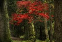 TREES / by Linda Cunningham
