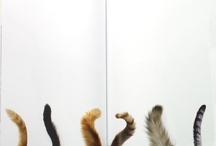 because cats / by skye zambrana // skye z designs