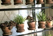 terrariums & indoor gardening / by Tressa Nielson Watkins