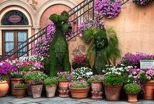 Garden's & Gardening  / by Anna Stigall Marcotte
