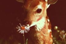 Cutesies / People, animals, & things that are simply, cute.  / by Bridgette Cooper