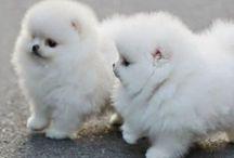 Cute Stuff / Looks so much like Pooh Bear  / by Katherine Peddycoart