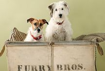 Must Love Dogs / by Teresa Livingston