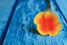 True Colors / by Shunsuke Emaru