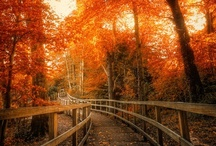 Fall Pictures & Decor / by Your Ghost Host