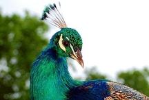 Beautiful birds / by Terry Owen